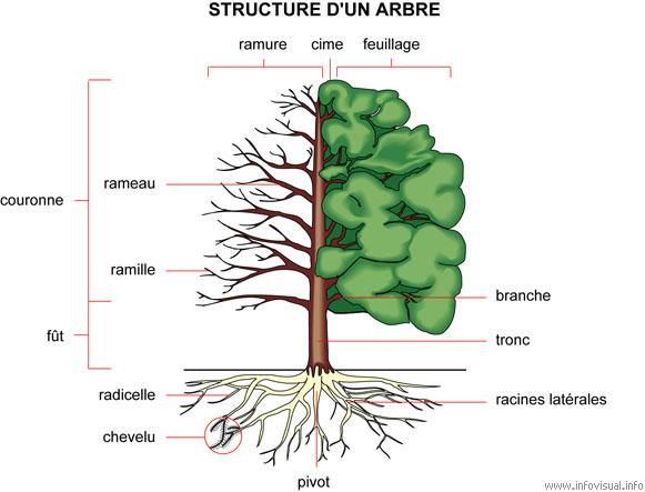 structurearbre.jpg